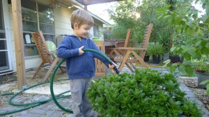 Watering with Gatorhyde Lead Free garden hose