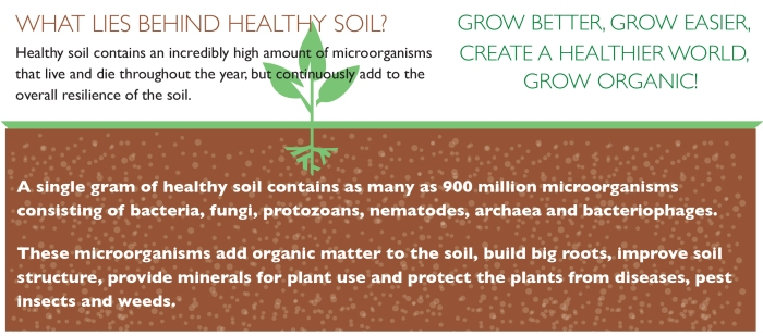 Healthy soil makes healthy plants