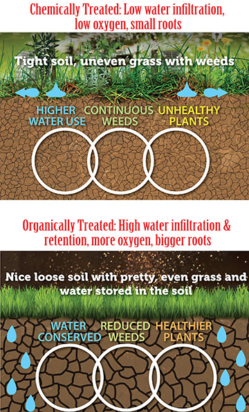 Organic-and-Chemical-infographic-web-size