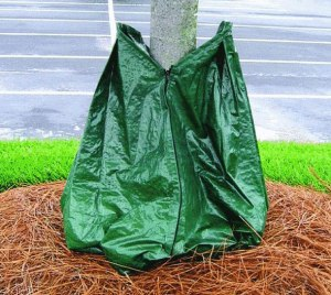 deep watering tree roots with tree bag