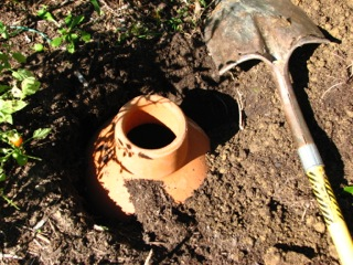 Bury the porous terra cotta watering pot in the ground