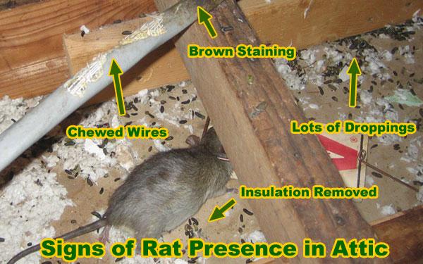 rat-a-tat-a-fooey